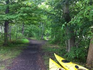 Tree trail kayak Bemus NY